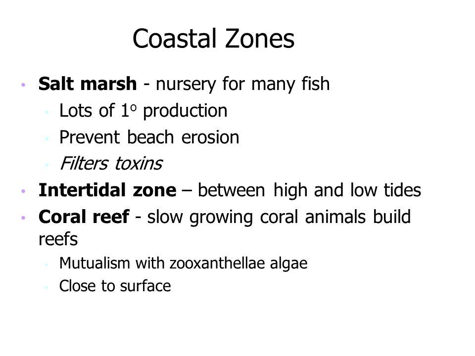 Coastal Zones Salt marsh - nursery for many fish Lots of 1o production