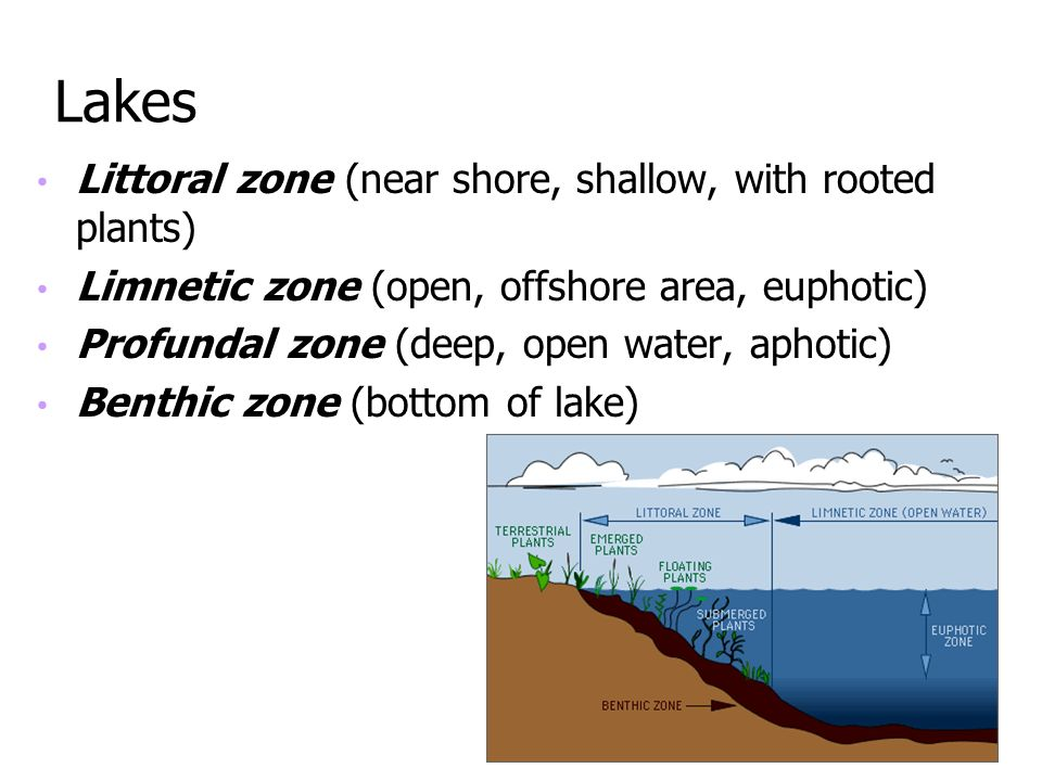 Lakes Littoral zone (near shore, shallow, with rooted plants)
