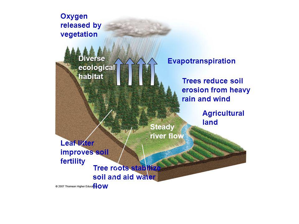 Oxygen released by vegetation