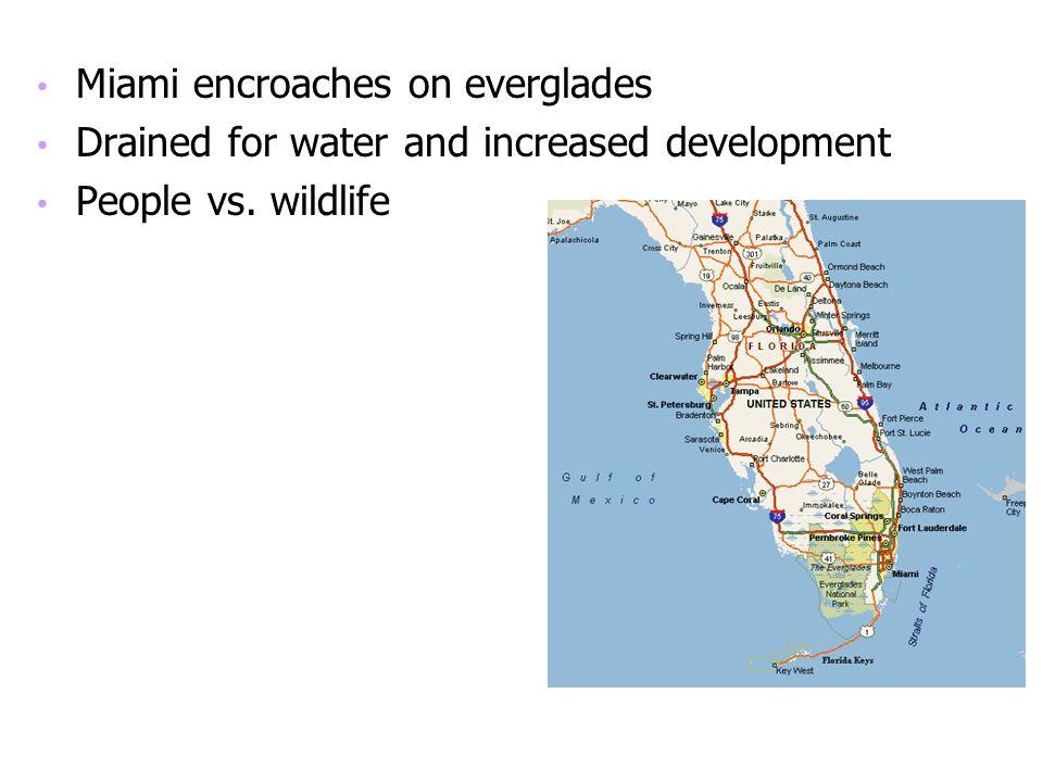 Miami encroaches on everglades