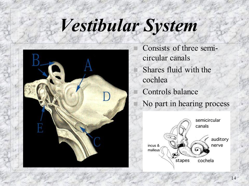 Vestibular System Consists of three semi-circular canals
