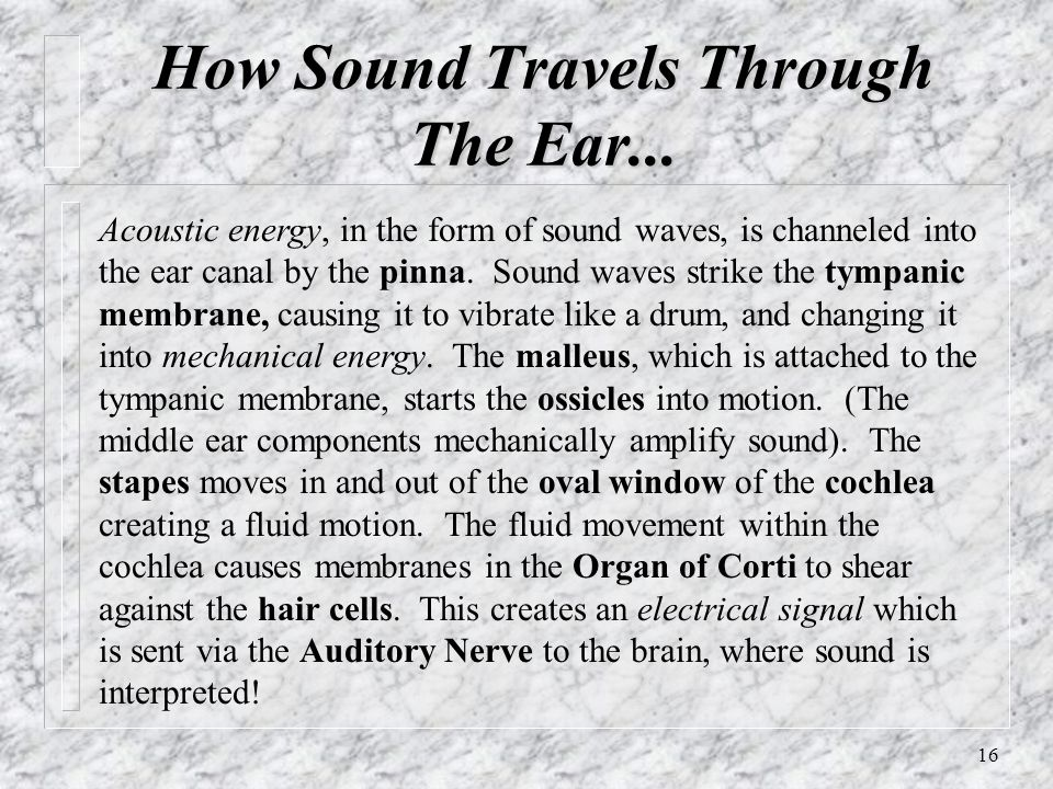 How Sound Travels Through The Ear...