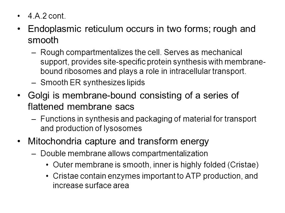 Endoplasmic reticulum occurs in two forms; rough and smooth