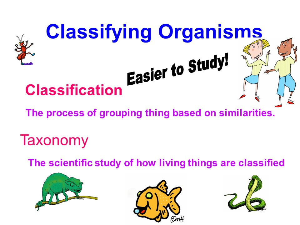 meet all the criteria for classifying