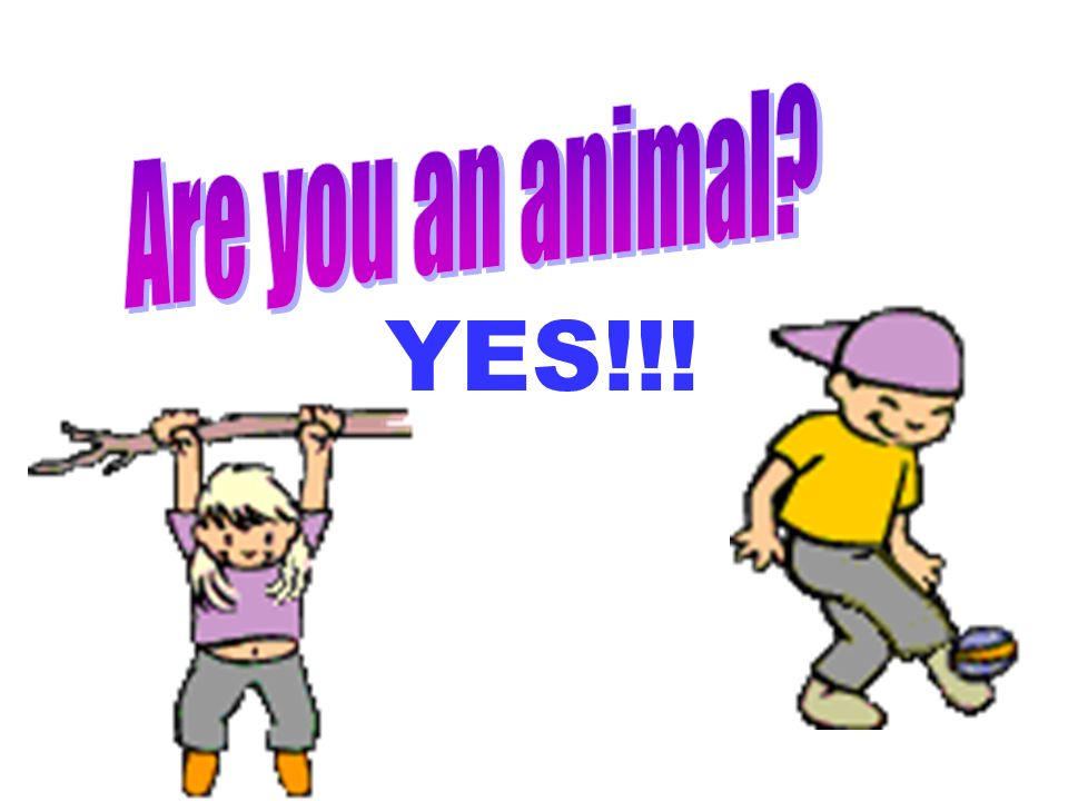 Are you an animal YES!!!
