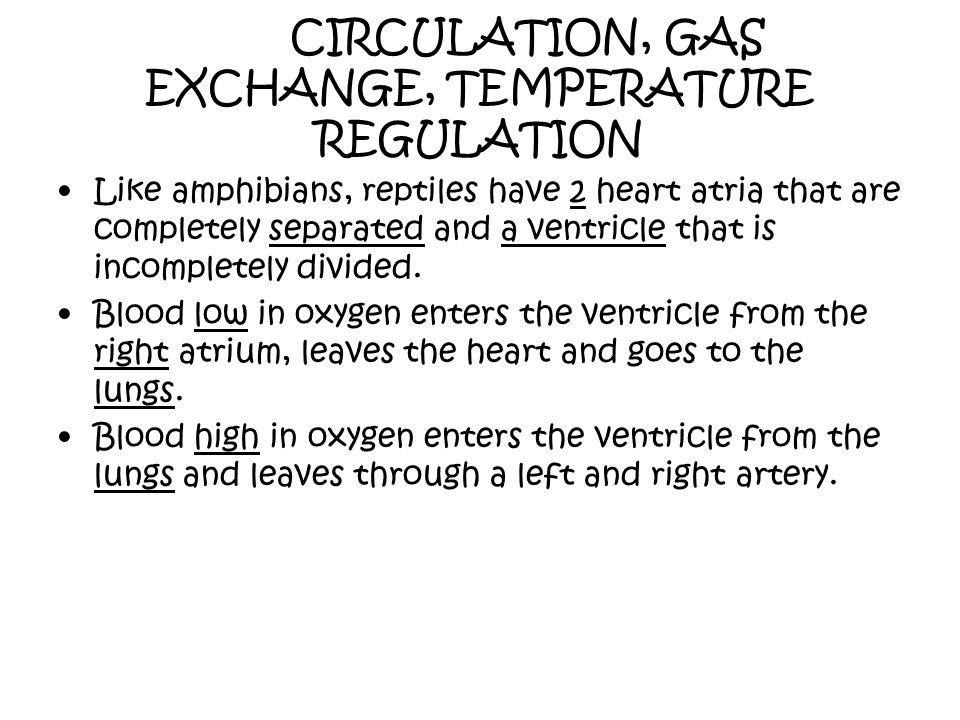 CIRCULATION, GAS EXCHANGE, TEMPERATURE REGULATION