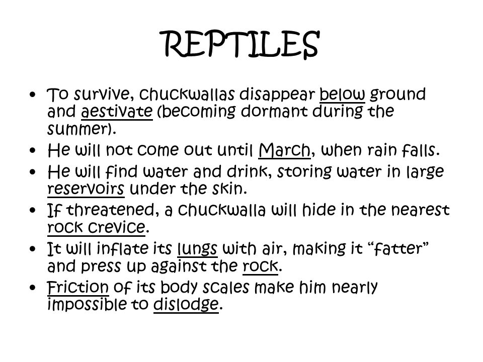 REPTILES To survive, chuckwallas disappear below ground and aestivate (becoming dormant during the summer).