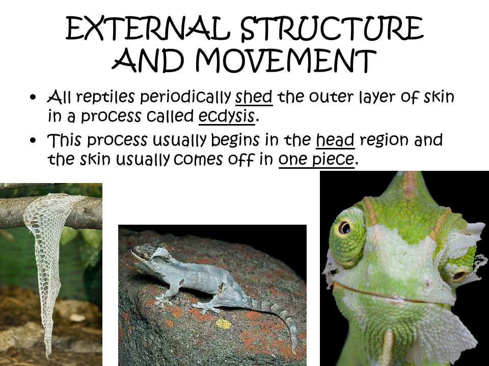 EXTERNAL STRUCTURE AND MOVEMENT