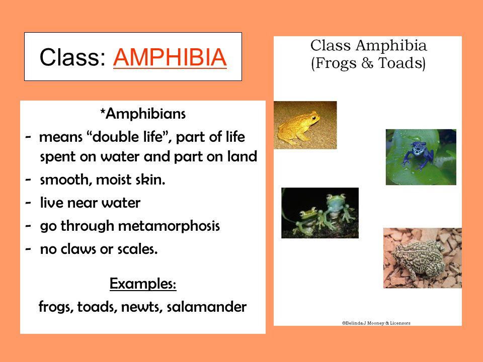 frogs, toads, newts, salamander