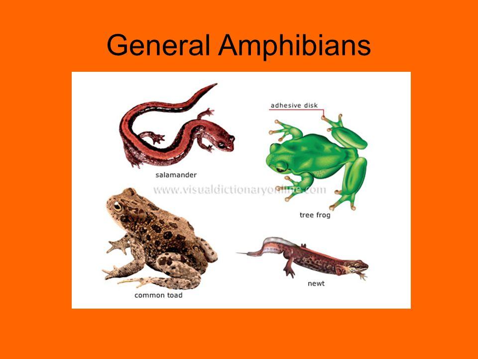 General Amphibians
