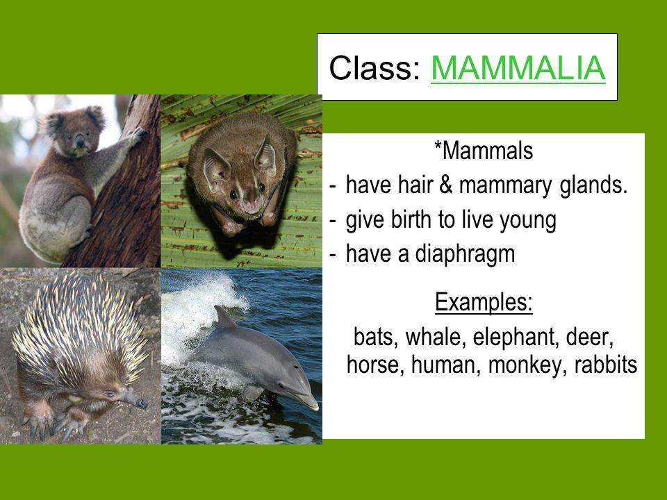 bats, whale, elephant, deer, horse, human, monkey, rabbits