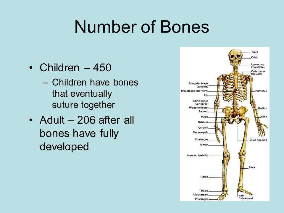 Number of Bones Children – 450
