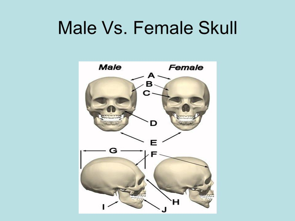 Male Vs. Female Skull