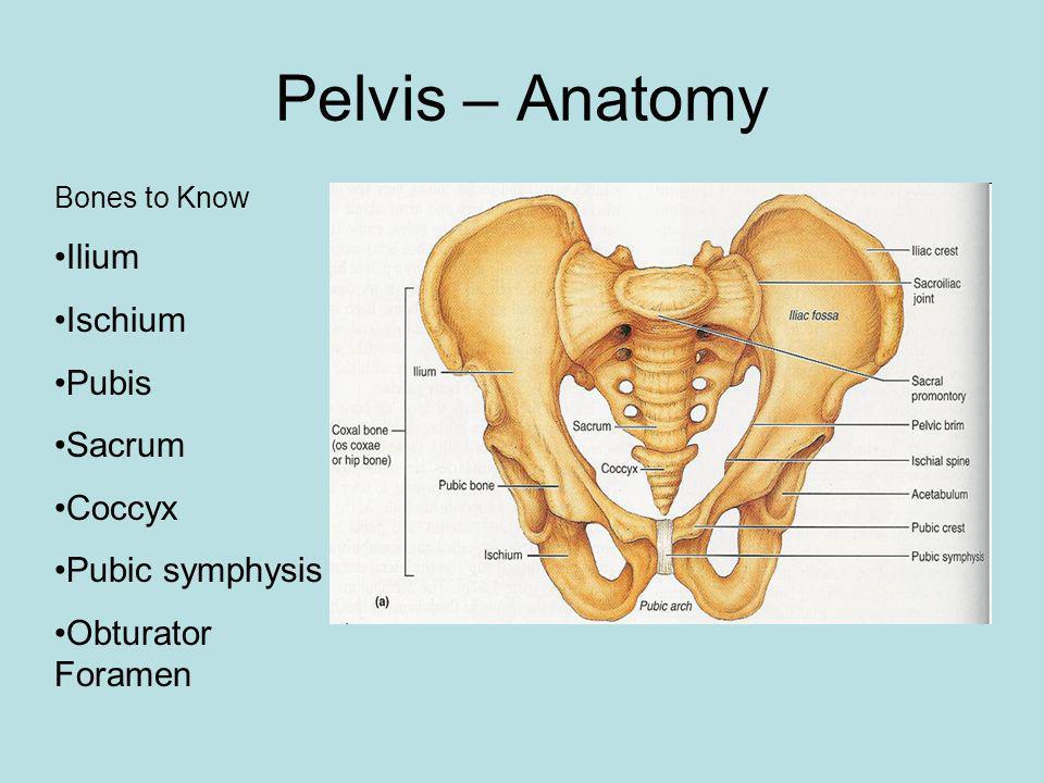 Pelvis – Anatomy Ilium Ischium Pubis Sacrum Coccyx Pubic symphysis