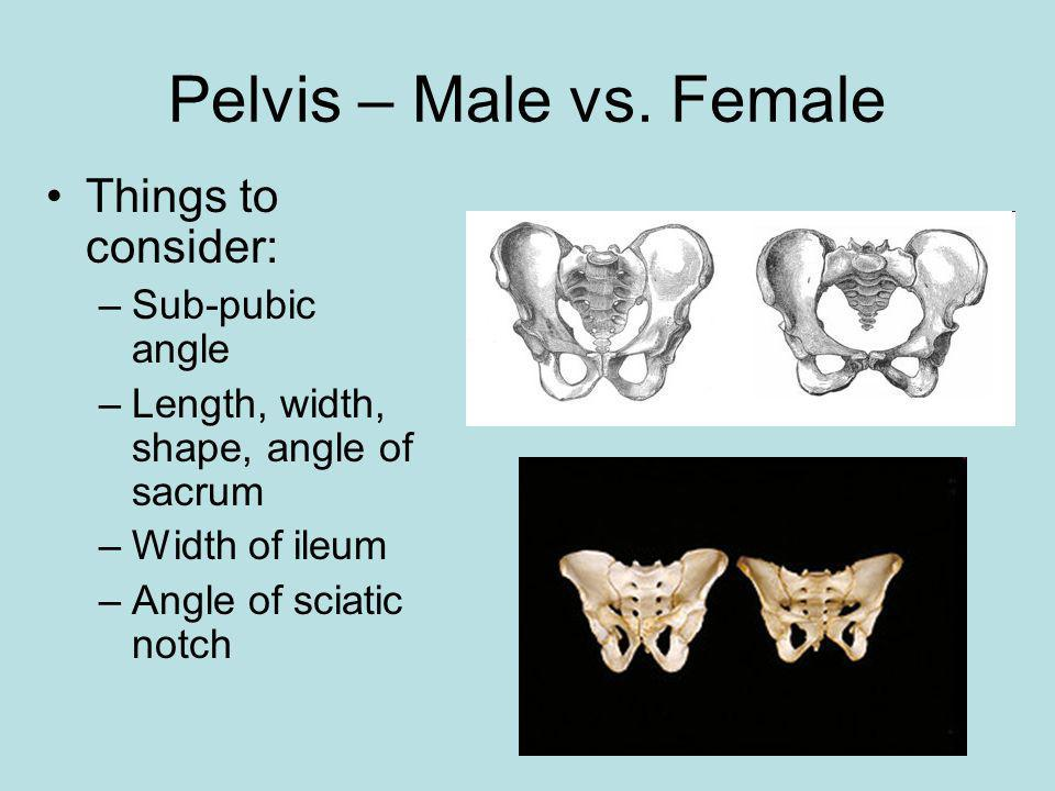 Pelvis – Male vs. Female Things to consider: Sub-pubic angle