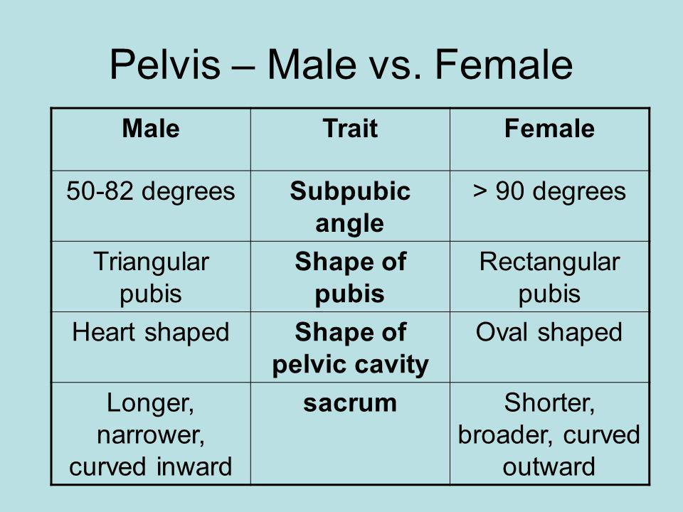 Pelvis – Male vs. Female Male Trait Female 50-82 degrees