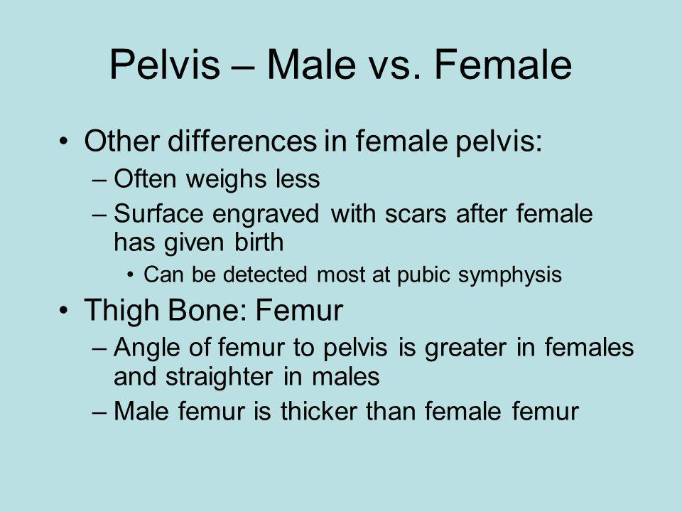 Pelvis – Male vs. Female Other differences in female pelvis: