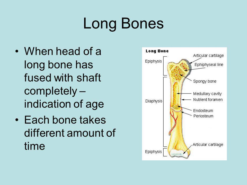 Long Bones When head of a long bone has fused with shaft completely – indication of age.