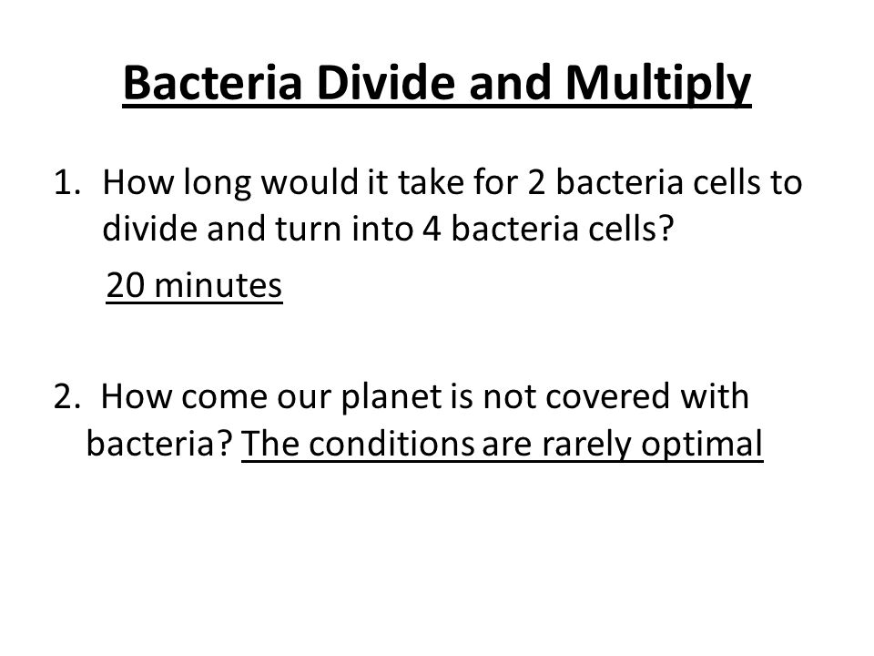 Bacteria Divide and Multiply
