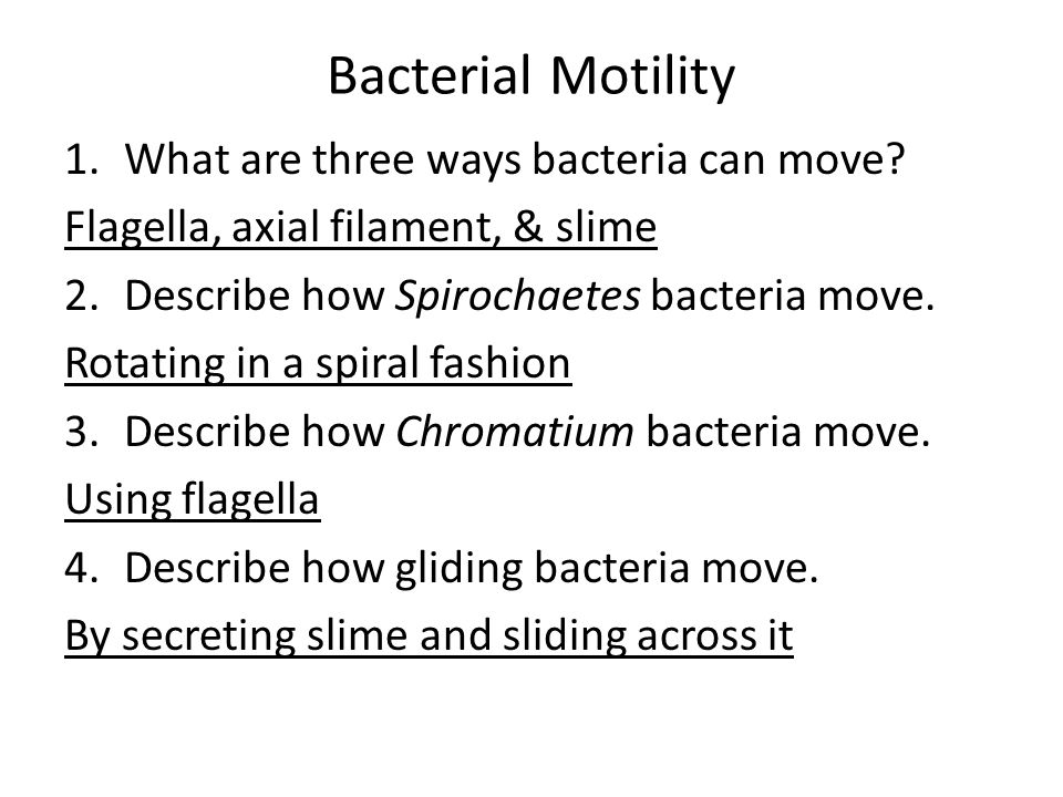Bacterial Motility What are three ways bacteria can move