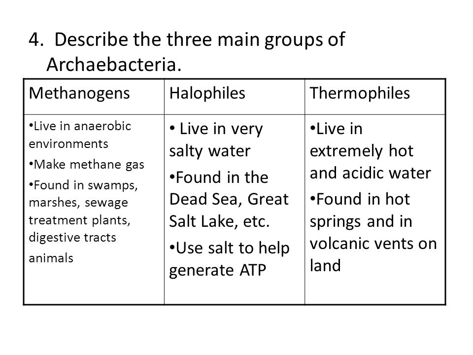 4. Describe the three main groups of Archaebacteria.