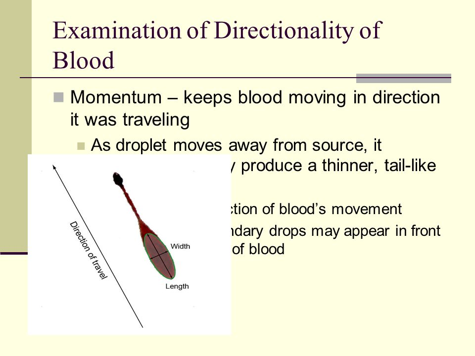 Examination of Directionality of Blood
