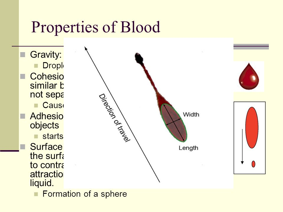Properties of Blood Gravity: pulls it to ground