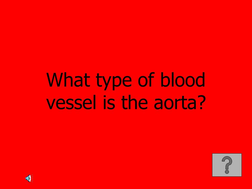 What type of blood vessel is the aorta
