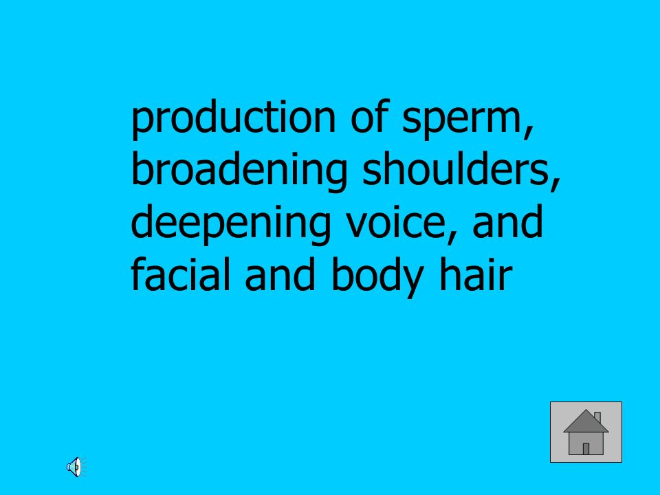 production of sperm, broadening shoulders, deepening voice, and facial and body hair