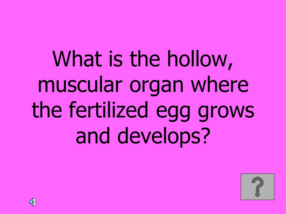 What is the hollow, muscular organ where the fertilized egg grows and develops