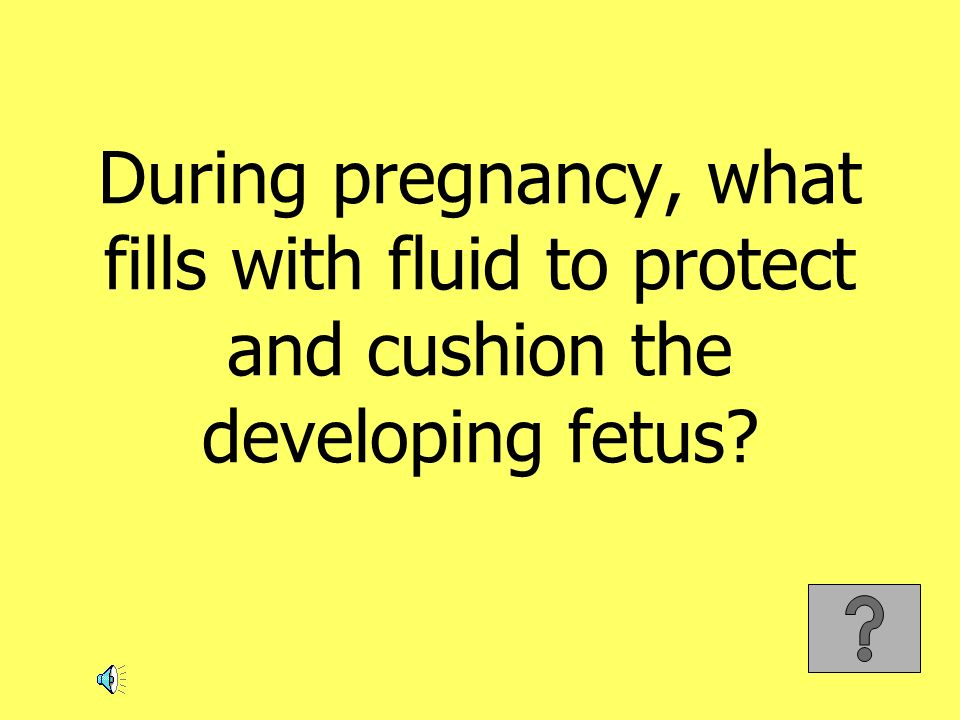 During pregnancy, what fills with fluid to protect and cushion the developing fetus