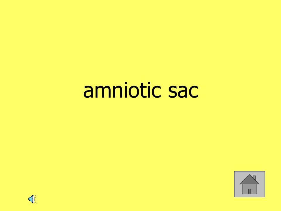 amniotic sac