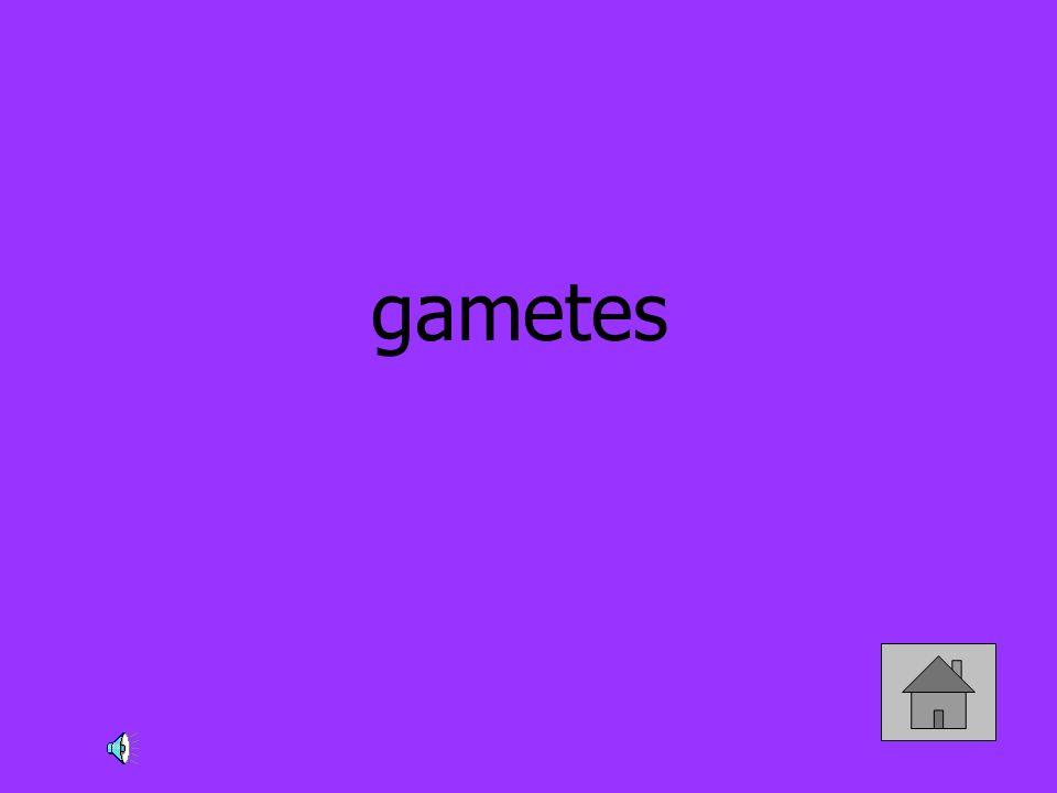 gametes