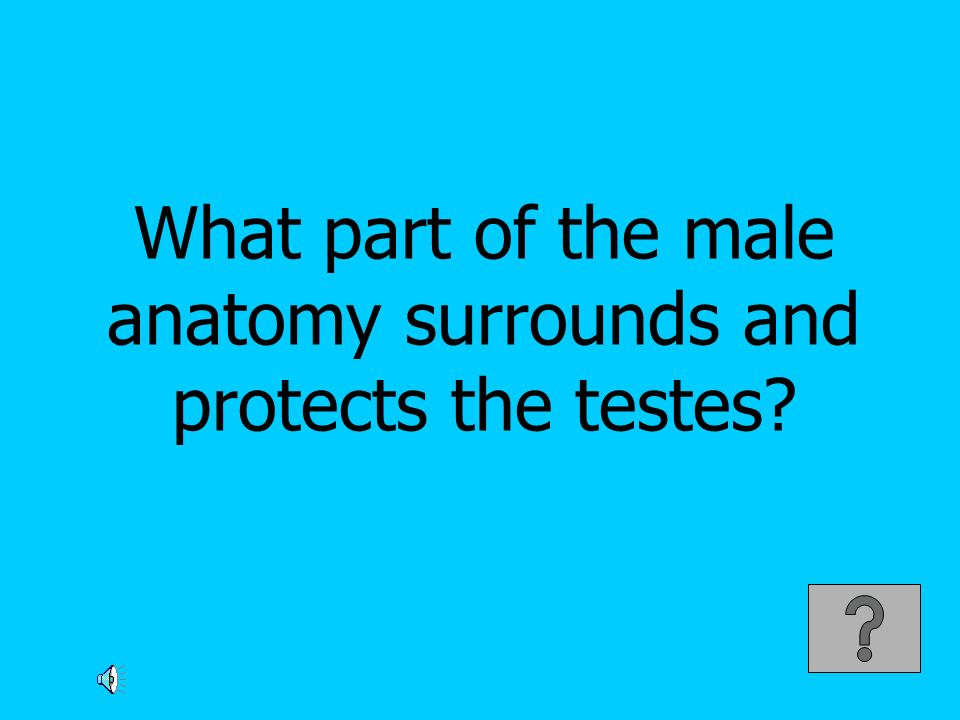 What part of the male anatomy surrounds and protects the testes