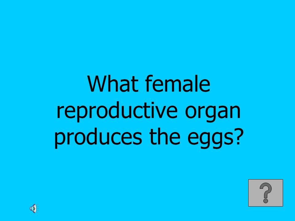 What female reproductive organ produces the eggs