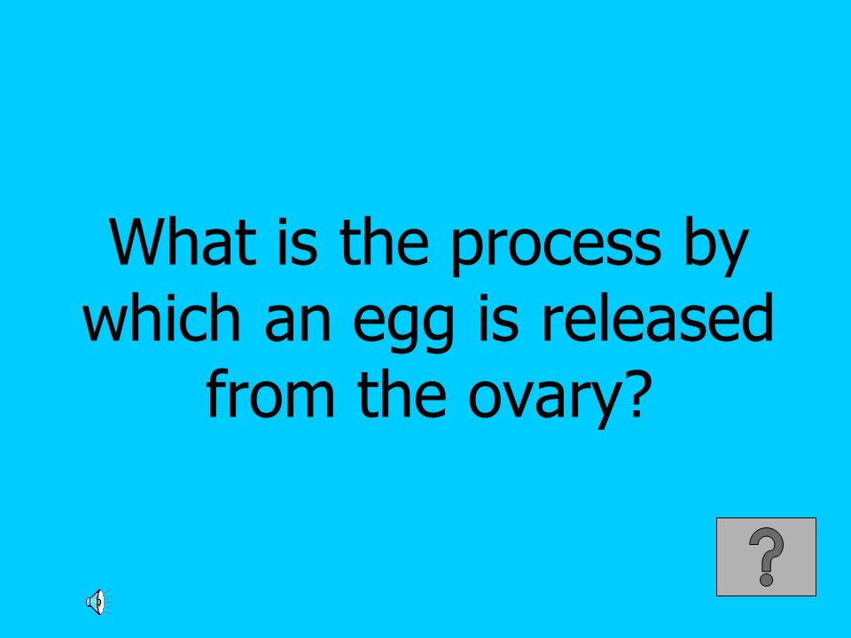 What is the process by which an egg is released from the ovary