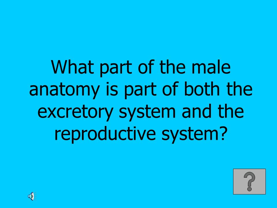 What part of the male anatomy is part of both the excretory system and the reproductive system
