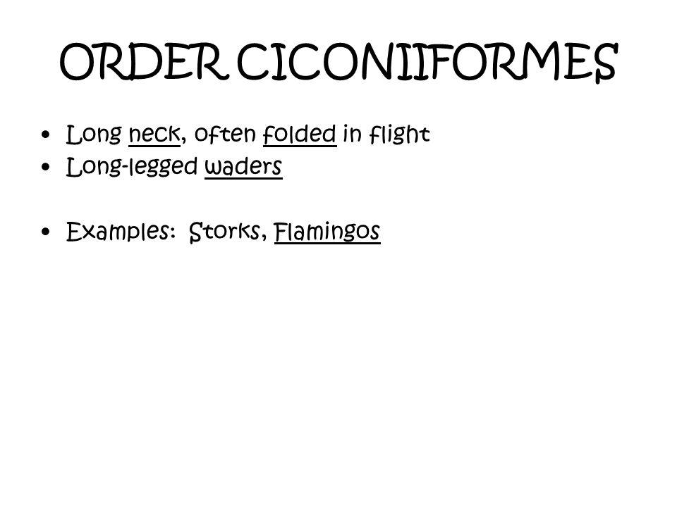 ORDER CICONIIFORMES Long neck, often folded in flight