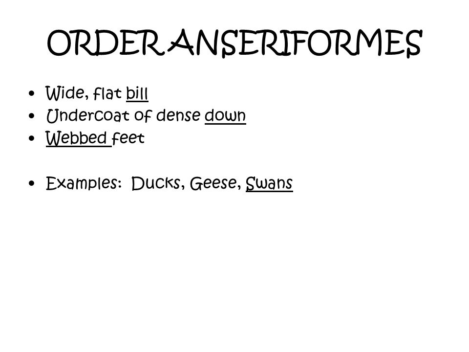 ORDER ANSERIFORMES Wide, flat bill Undercoat of dense down Webbed feet