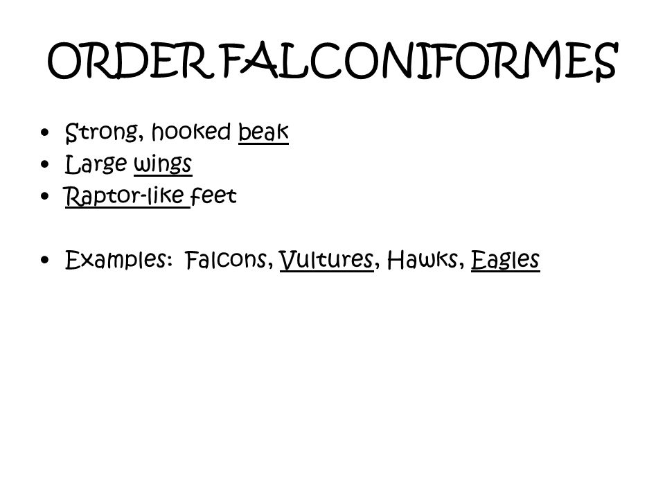 ORDER FALCONIFORMES Strong, hooked beak Large wings Raptor-like feet