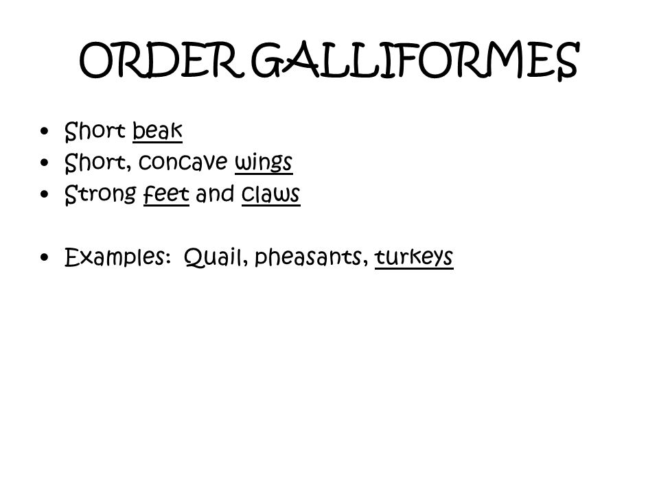 ORDER GALLIFORMES Short beak Short, concave wings