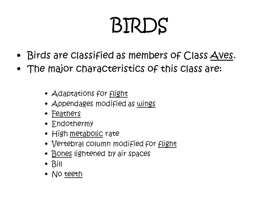 BIRDS Birds are classified as members of Class Aves.