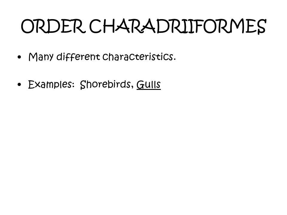 ORDER CHARADRIIFORMES