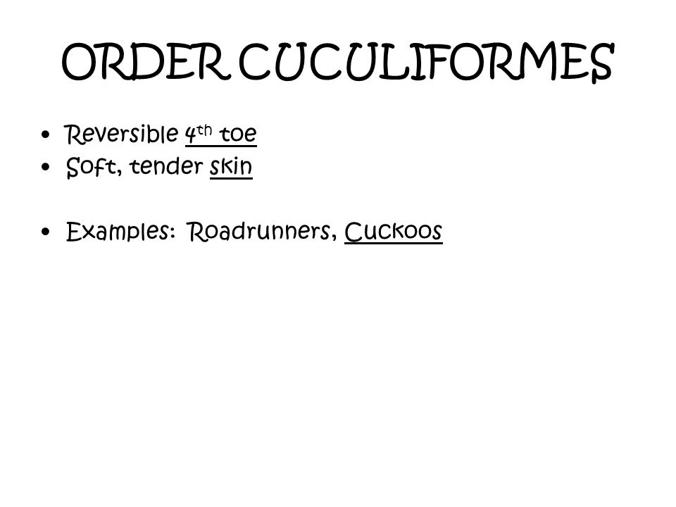 ORDER CUCULIFORMES Reversible 4th toe Soft, tender skin