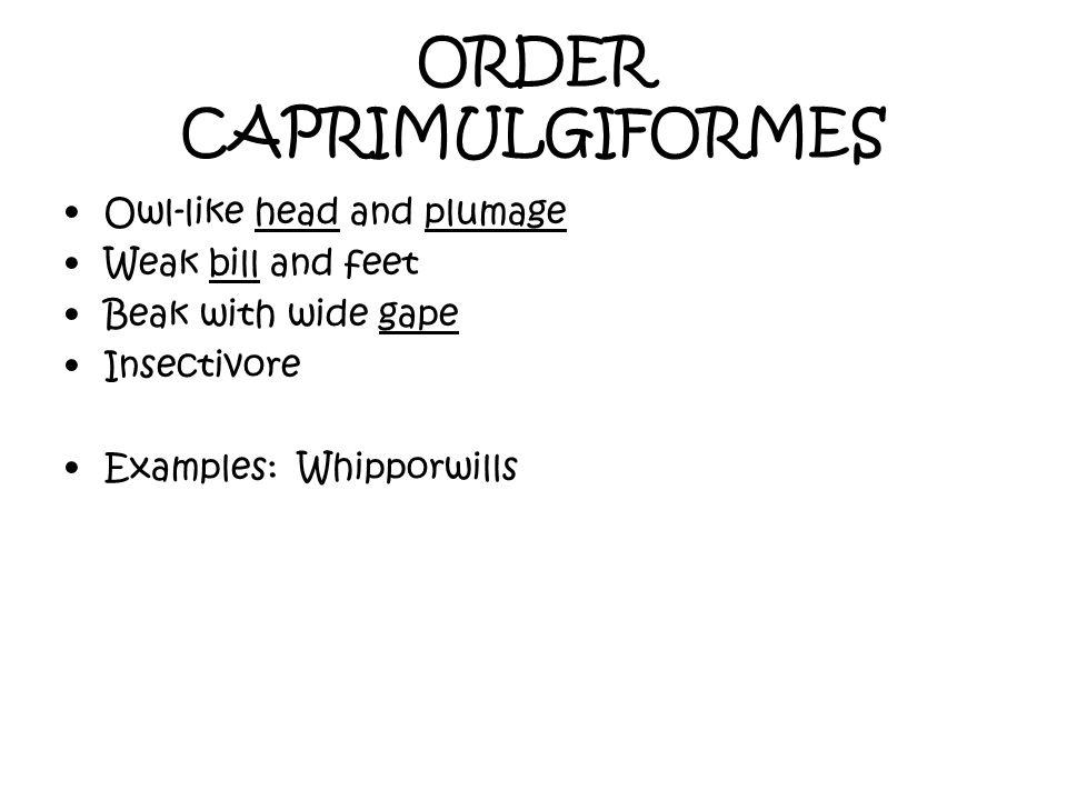 ORDER CAPRIMULGIFORMES