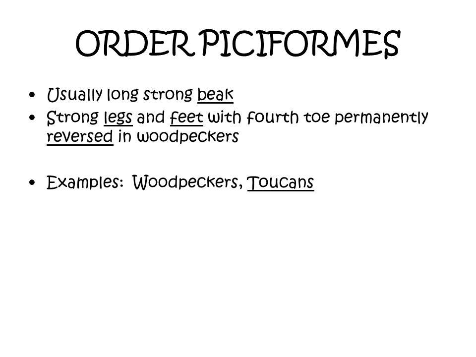 ORDER PICIFORMES Usually long strong beak