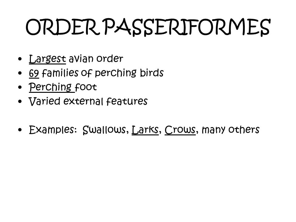 ORDER PASSERIFORMES Largest avian order 69 families of perching birds
