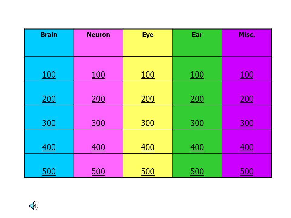 Brain Neuron Eye Ear Misc. 100 200 300 400 500