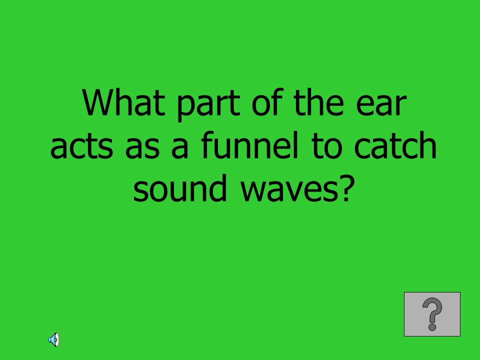 What part of the ear acts as a funnel to catch sound waves