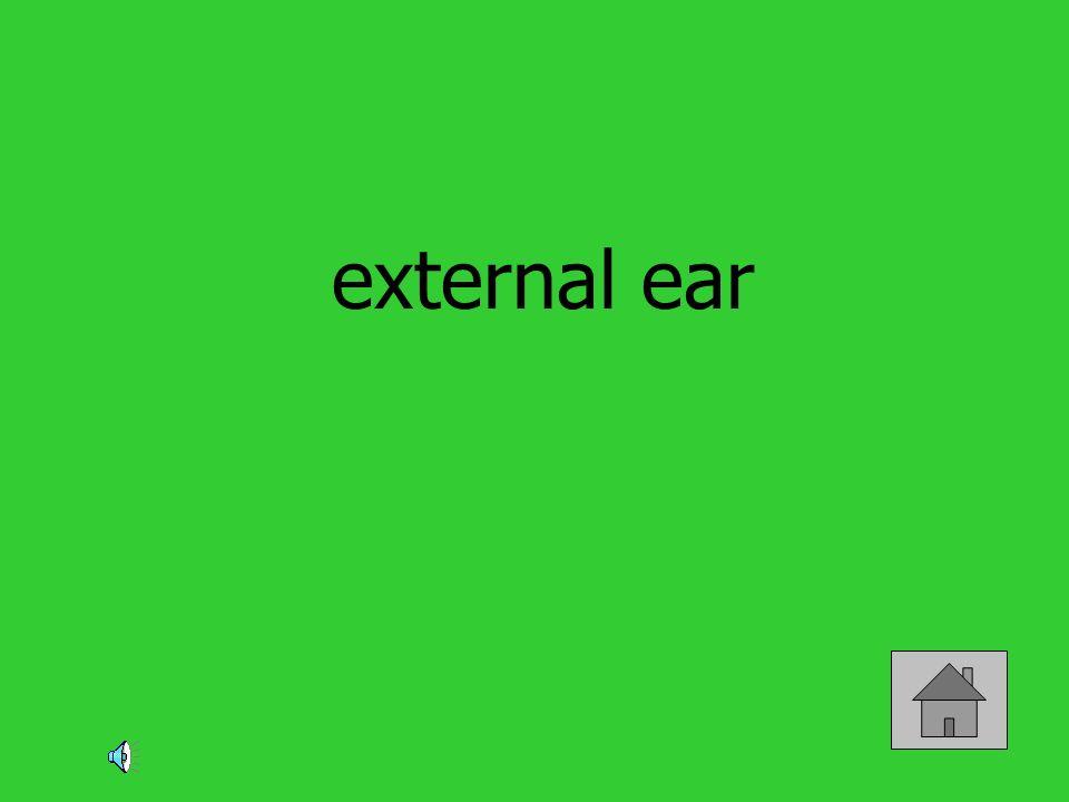 external ear